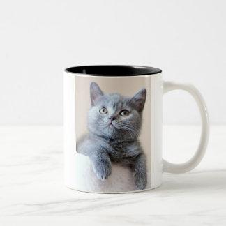 Gray British Shorthair Cat Two-Tone Coffee Mug