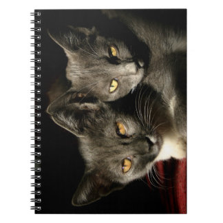 Gray Cats Photo Photo Notebook (80 Pages B&W)
