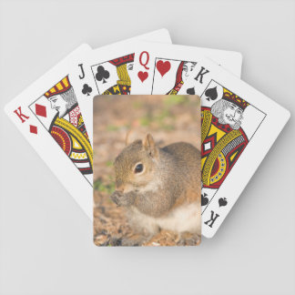 Gray Squirrel eating seeds Playing Cards