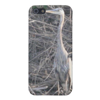 Great Blue Heron 4/4s iPhone 5/5S Case