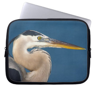 Great Blue Heron (Ardea herodias). USA, Florida, Laptop Sleeve