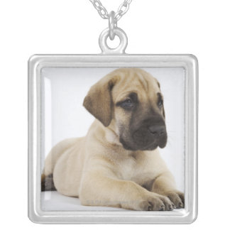 Great Dane puppy Lying in Studio Silver Plated Necklace
