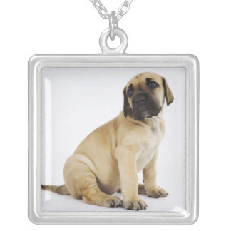 Great Dane Puppy Sitting in Studio Silver Plated Necklace