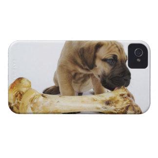 Great Dane puppy with bone in studio Case-Mate iPhone 4 Cases