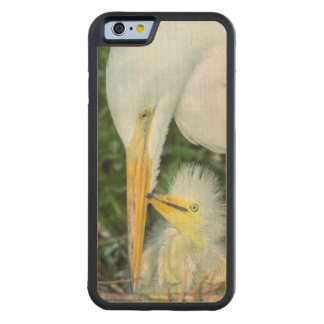 Great Egret and baby egret at Gatorland Carved Maple iPhone 6 Bumper Case