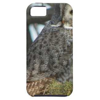 Great Grey Owl Photo Gift iPhone 5 Cases