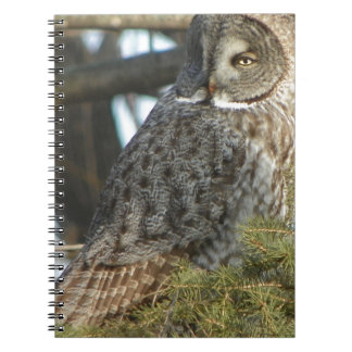 Great Grey Owl Photo Gift Spiral Notebooks