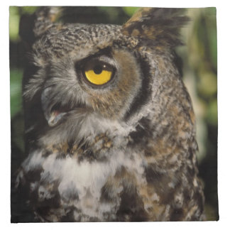 great horned owl, Stix varia, in the Anchorage Napkin