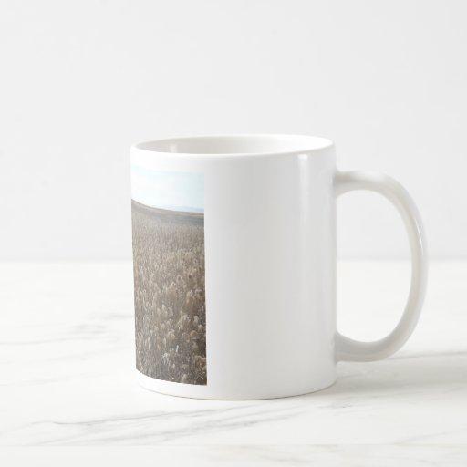 great salt lake shorelands preserve mugs