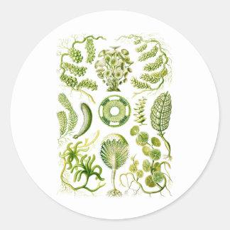 Green Algae Classic Round Sticker