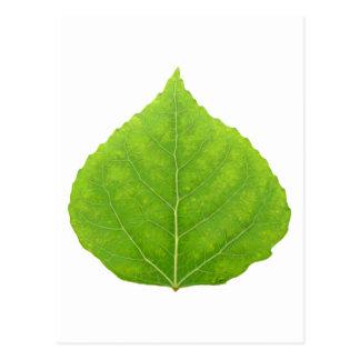 Green Aspen Leaf #11 Postcard