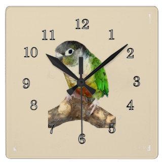 Green Cheek Conure Square Wall Clock