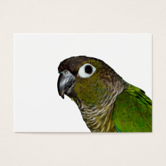Green Cheeked Conure Business Card