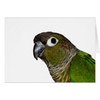 Green Cheeked Conure Card