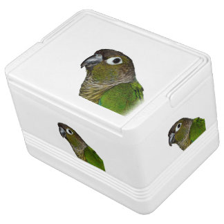 Green Cheeked Conure Chilly Bin