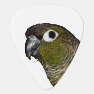 Green Cheeked Conure Guitar Pick