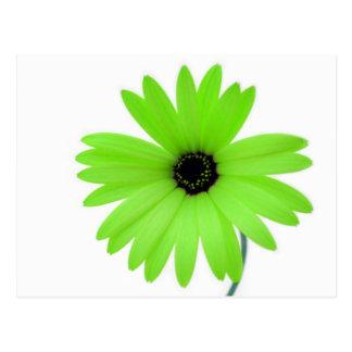 Green daisy postcard