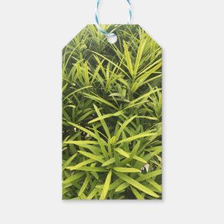 Green Desert Plant Gift Tags