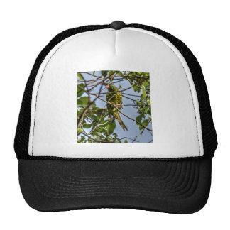 GREEN LORIKEET RURAL QUEENSLAND AUSTRALIA CAP