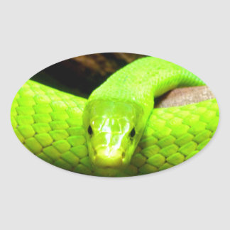 green mamba snake Wait for love in peace Stickers