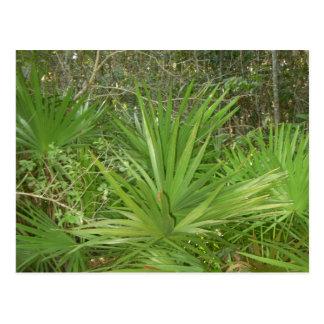 Green Palms photo by Lorette Starr Postcard