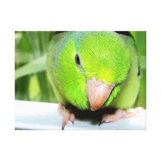 Green Parrotlet Bird Portrait wrapped canvas art