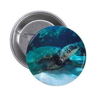 Green Sea Turtle Button