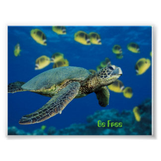 Green Sea Turtle, Be Free Poster