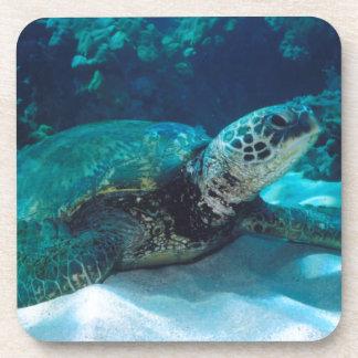 Green Sea Turtle Drink Coaster