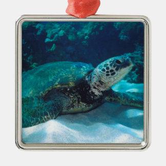 Green Sea Turtle Christmas Tree Ornaments