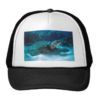 Green Sea Turtle Mesh Hats