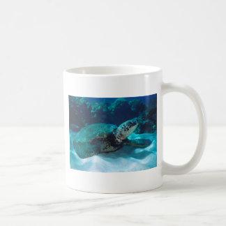 Green Sea Turtle Mugs