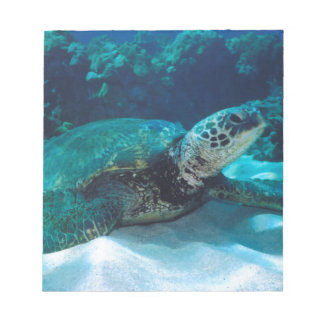 Green Sea Turtle Note Pads