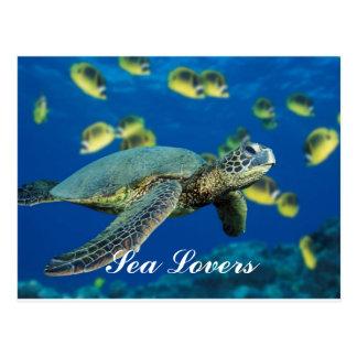 Green Sea Turtle Postcard