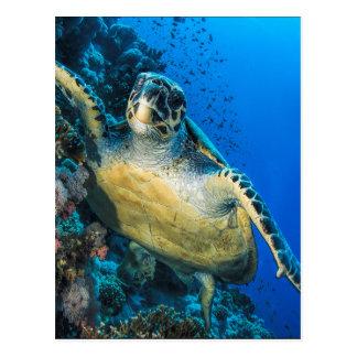 Green Sea Turtle | Red Sea Postcard