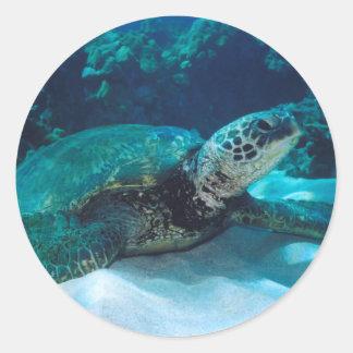 Green Sea Turtle Round Stickers