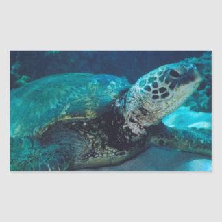 Green Sea Turtle Rectangular Stickers