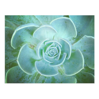 Green Succulent Closeup Postcard