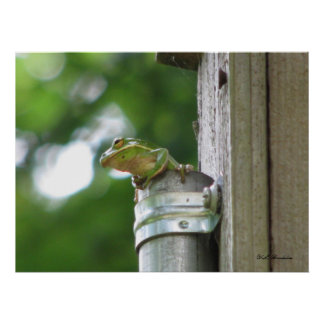 Green Tree Frog in Pipe Poster
