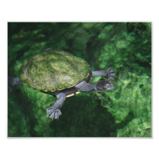 Green Turtle Fine Art Print Art Photo