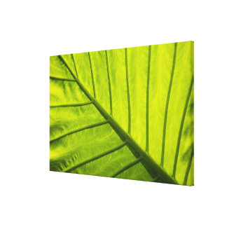 Green veined leaves of tropical foliage in canvas print