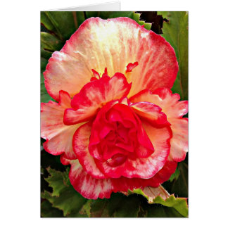 Greeting Card - Beautiful Begonia with Love