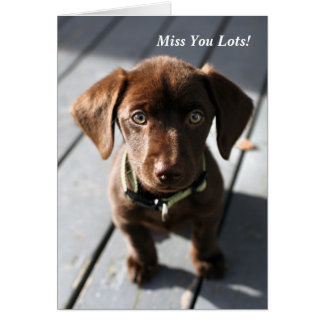 Greeting Card Puppy Chocolate Labrador