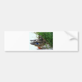 Grey Bird with Blue on Feather and Orange Feet Bumper Sticker