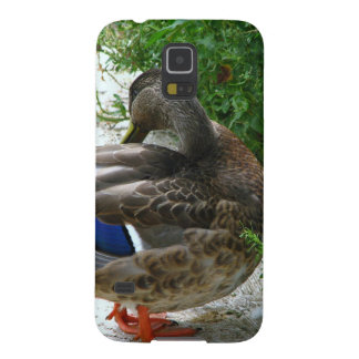 Grey Bird with Blue on Feather and Orange Feet Galaxy S5 Case
