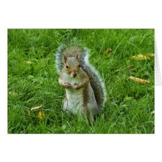 Grey Squirrel, Bute Park, Cardiff Card