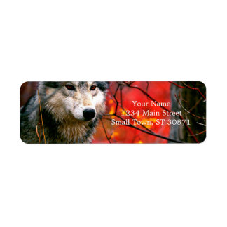 Grey Wolf in Beautiful Red and Yellow Foliage Return Address Label
