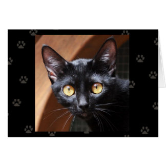 Greyfoot Cat Rescue Bombay Cat Card