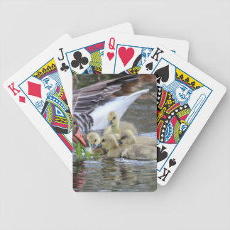 Greylag geese feeding goslings bicycle playing cards