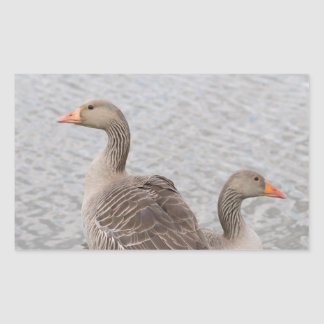 Greylag Geese Rectangular Sticker